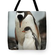 Gentoo Penguin With Young Tote Bag