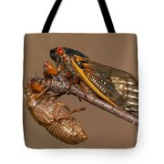 17-year Periodical Cicada II Tote Bag