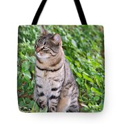 Cat In Hydra Island Tote Bag