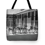 1930s Kennel Yard Full Of Foxhound Dogs Tote Bag