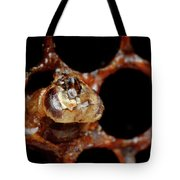 A Honeybee Hive After Colony Collapse Tote Bag