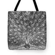 A Peacocks Feathers Tote Bag