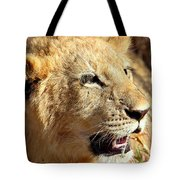 African Lion Cub Portrait Tote Bag