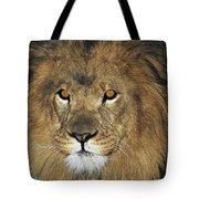 African Lion Portrait Wildlife Rescue Tote Bag