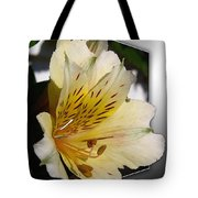 Alstroemeria Named Marilene Staprilene Tote Bag