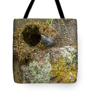 American Dipper And Nest   #1487 Tote Bag