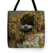 American Dipper And Nest   #1538 Tote Bag