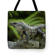 An Iguana Sunbathes In The Ancient Tote Bag