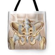 Anatomy Of Human Pelvic Bone Tote Bag