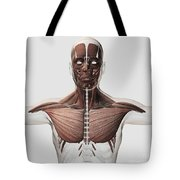 Anatomy Of Male Muscular System, Side Tote Bag
