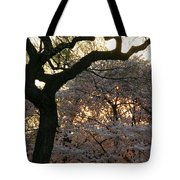 Angry Trees At Sunset Tote Bag