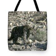 Arabian Leopard Panthera Pardus 1 Tote Bag