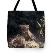Arabian Leopard Panthera Pardus Tote Bag