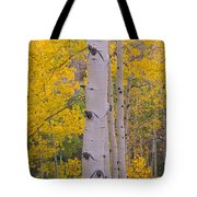 Aspen Trees In A Forest, Telluride, San Tote Bag