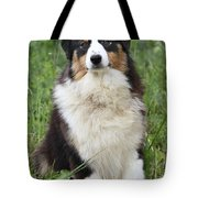 Australian Shepherd Dog Tote Bag
