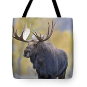 Autumn Bull Moose IIi Tote Bag
