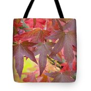 Autumnal Liquidambar Leaves Tote Bag