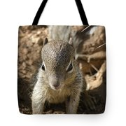 Baby Rock Squirrel Tote Bag