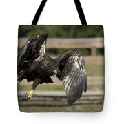 Bald Eagle In Flight Photo Tote Bag