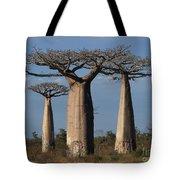 baobabs of Madagascar Tote Bag