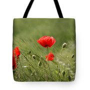 Beautiful Poppies 4 Tote Bag