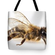 Bee Species Apis Mellifera Common Name Western Honey Bee Or Euro Tote Bag