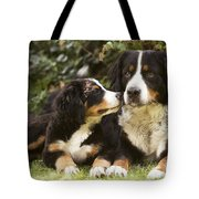 Bernese Mountain Dogs Tote Bag