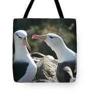 Black Browed Albatross Pair Tote Bag