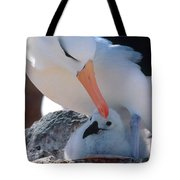 Black-browed Albatross With Chick Tote Bag by Art Wolfe