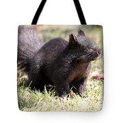 Black Squirrel Tote Bag