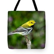 Black Throated Green Warbler Tote Bag