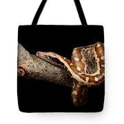 Blood Python Python Brongersmai Tote Bag