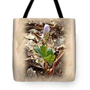 Bloodroot Wildflower - Sanguinaria Canadensis Tote Bag