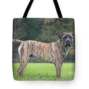 Boerboel Dog Tote Bag