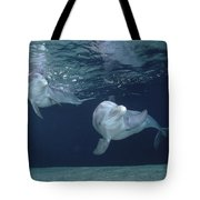 Bottlenose Dolphin  Pair Hawaii Tote Bag
