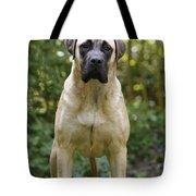 Bullmastiff Dog Tote Bag