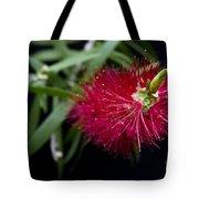 Callistemon Citrinus - Crimson Bottlebrush Hawaii Tote Bag
