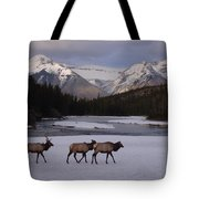 Elk Crossing, Banff National Park, Alberta Tote Bag