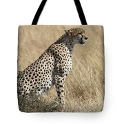 Cheetah Searching For Prey Tote Bag