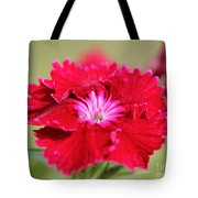 Cherry Dianthus From The Floral Lace Mix Tote Bag