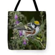 Chestnut-sided Warbler Tote Bag