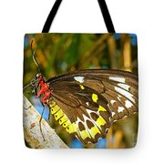 Common Birdwing Butterfly Tote Bag