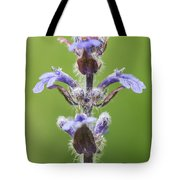 Common Bugle Tote Bag