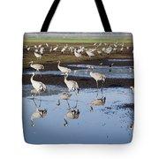 Common Crane Grus Grus Tote Bag