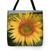 Common Sunflower Helianthus Annuus Tote Bag