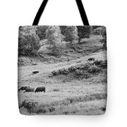 Cows Grazing In Field Rockport Maine Tote Bag