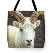 Dall Sheep Tote Bag