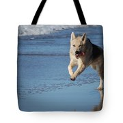 Dog On Beach Tote Bag
