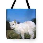 Domestic Goat Tote Bag by Hans Reinhard