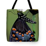 Eastern Black Swallowtail Tote Bag